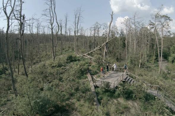 Kadras iš būsimo filmo Rūgštus miškas